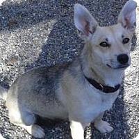 Carolina Dog Mix Dog for adoption in Oakley, California - Thelma