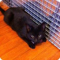 Adopt A Pet :: Kuma - Lombard, IL