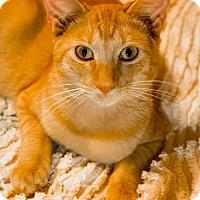Adopt A Pet :: Chigger - Warner Robins, GA