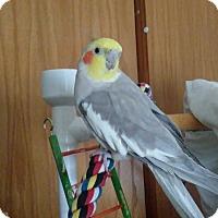 Adopt A Pet :: Georgie - Aurora, IL