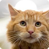 Adopt A Pet :: Charlie - Woodland, CA