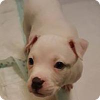 Adopt A Pet :: Crystal - Savannah, GA