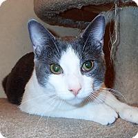 Adopt A Pet :: Smokie - North Wilkesboro, NC