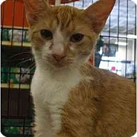 Adopt A Pet :: Bruce - Orlando, FL