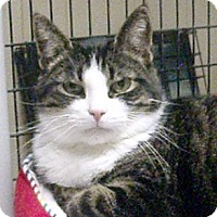 Adopt A Pet :: Butters - Germansville, PA
