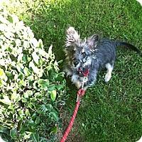 Adopt A Pet :: Charlotte - Santa Monica, CA