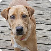 Adopt A Pet :: Daisy - Toledo, OH