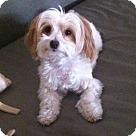 Adopt A Pet :: Nobu