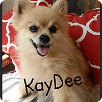 Adopt A Pet :: KayDee - Orange, CA