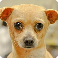 Adopt A Pet :: Wiggles - Gainesville, FL