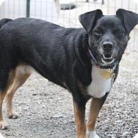 Adopt A Pet :: Tyne - Oakland, AR