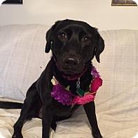 Adopt A Pet :: Gypsy - Clarkston, MI