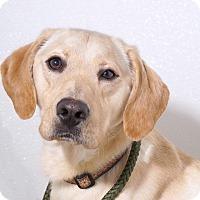 Adopt A Pet :: Hunter - Sudbury, MA