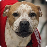 Adopt A Pet :: Sypher-couresty post only - Schaumburg, IL