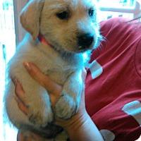 Adopt A Pet :: Desi - Waldorf, MD