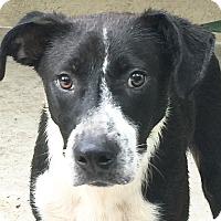 Adopt A Pet :: Milo - St Petersburg, FL