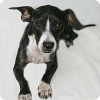 Adopt A Pet :: Scout - Lufkin, TX