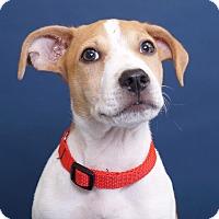 Adopt A Pet :: Lee - Sudbury, MA