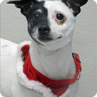Adopt A Pet :: Scout - Topeka, KS