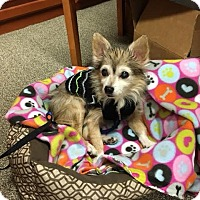 Adopt A Pet :: Wolfman Jack - Just Adorable! - Quentin, PA