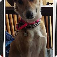 Adopt A Pet :: Channy - Apache Junction, AZ