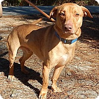 Adopt A Pet :: Asher - Newport, NC