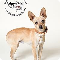 Adopt A Pet :: Chipper - Apache Junction, AZ