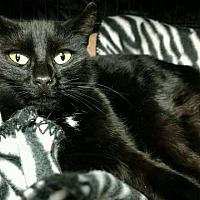 Adopt A Pet :: Sadie - Saginaw, MI