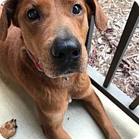 Adopt A Pet :: Wyatt - Smithfield, NC
