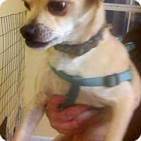 Adopt A Pet :: Chipper - Melrose, FL