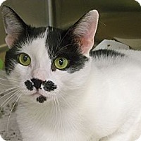 Adopt A Pet :: Mr. Mustachio - Secaucus, NJ
