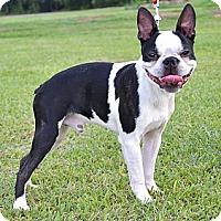 Adopt A Pet :: *Cagney - PENDING - Westport, CT