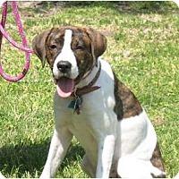Adopt A Pet :: Tessa - Kingwood, TX