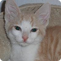 Adopt A Pet :: RiverSong - North Highlands, CA