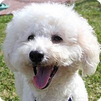 Adopt A Pet :: Davey - La Costa, CA