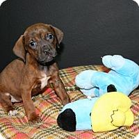 Adopt A Pet :: Memphis - Lufkin, TX