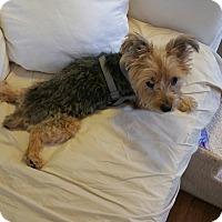 Adopt A Pet :: Apollo - West Palm Beach, FL