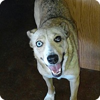 Adopt A Pet :: Darla - Scottsdale, AZ