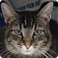 Adopt A Pet :: Columbus - Redwood City, CA