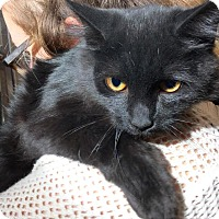 Adopt A Pet :: Merlin - Webster, MA