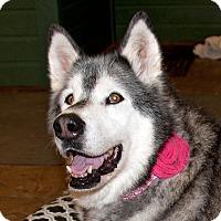 Adopt A Pet :: JESSE - Boise, ID