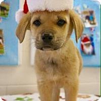 Adopt A Pet :: Branch - Carteret/Eatontown, NJ