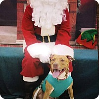 Adopt A Pet :: Miley - Mt. Clemens, MI