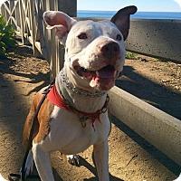 Adopt A Pet :: Ziggy - Los Angeles, CA