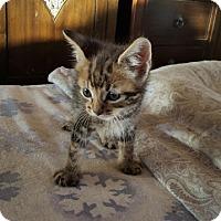 Adopt A Pet :: Sparky - Encinitas, CA