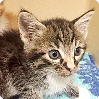 Adopt A Pet :: Tod - Lincolnton, NC