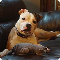 Adopt A Pet :: Chili - Wauwatosa, WI