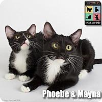 Adopt A Pet :: Phoebe - Palm Desert, CA