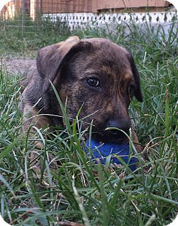 Adopt A Pet :: Porky-IN TRAINING  - Snow Hill, NC