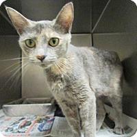 Adopt A Pet :: Gretchen - Windsor, VA